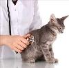 Ветеринарные клиники в Зиргане
